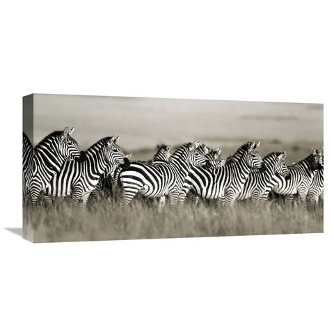 Global Gallery Frank Krahmer 'Grant's zebra, Masai Mara, Kenya' Stretched Canvas Artwork