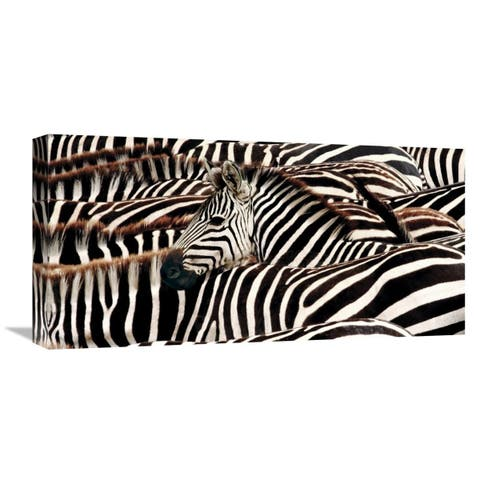Global Gallery Pangea Images 'Herd of zebras' Stretched Canvas Artwork