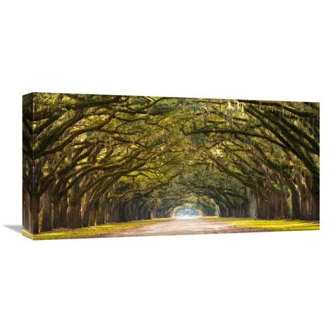 Global Gallery Anonymous Path lined with oak trees Stretched Canvas Artwork