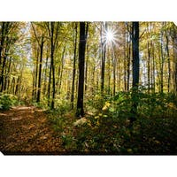 """""""Forest Trees"""" Giclee Print Canvas Wall Art"""