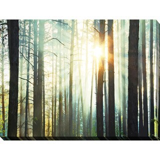 """Sunset in the Woods"" Giclee Print Canvas Wall Art"