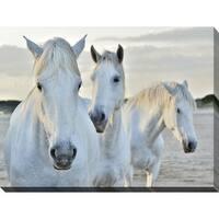 """White Horses"" Giclee Print Canvas Wall Art"