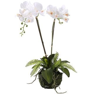 Ikee Design Artificial Everlasting Two Stems White Phalaenopsis Orchid Arrangement