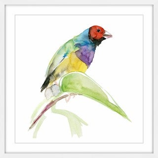 Marmont Hill - 'Tropical Bird' by Michelle Dujardin Framed Painting Print - Multi (More options available)