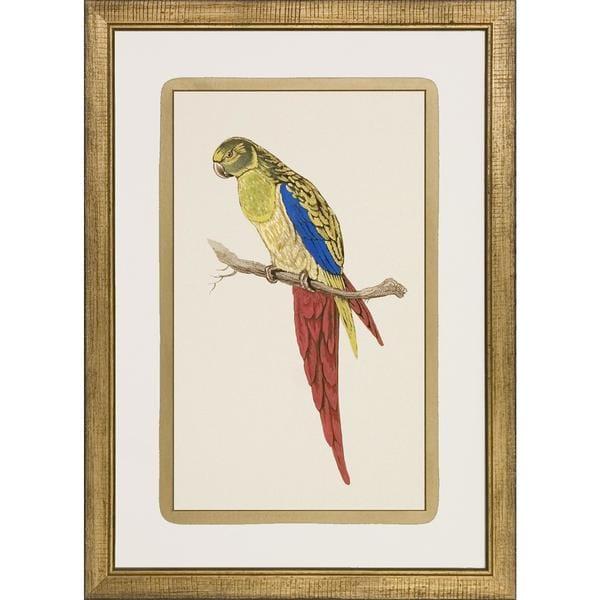 Art Virtuoso 'Luminous Parrots' Framed Art Print