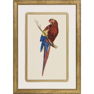 Art Virtuoso Luminous Parrots Framed Art Print