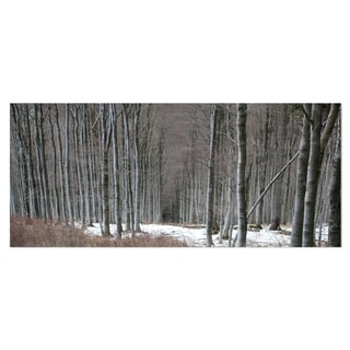 Designart 'Winter Forest with Thick Trees' Large Forest Metal Wall Art