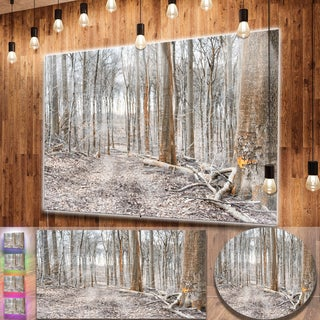 Designart 'Dense Forest in the Winter Photography' Modern Forest Metal Wall Art