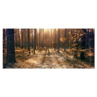 Designart 'Dark First Snow Forest Photo' Modern Forest Metal Wall Art