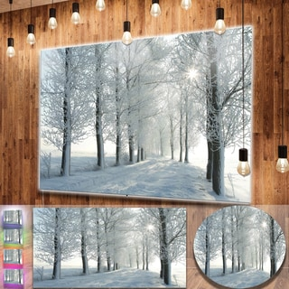 Designart 'Winter Trees Backlit by Morning Sun' Large Forest Metal Wall Art