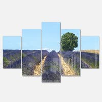Designart 'Beautiful Rows of Lavender in France' Landscape Glossy Metal Wall Art
