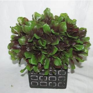 Jeco Half Ball Topiary in Pot