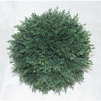 Jeco 5.9-inch Leaf Sphere
