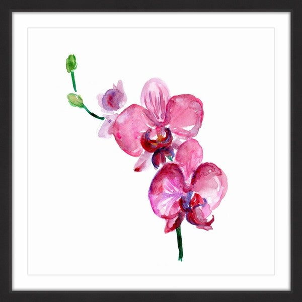 Marmont Hill - 'Pink Orchids' by Michelle Dujardin Framed Painting Print