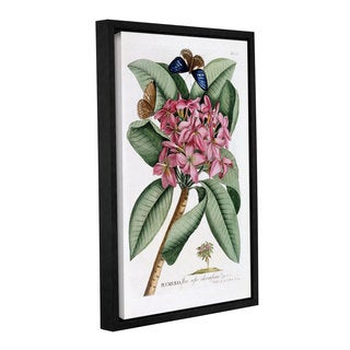 Georg Dionysius Ehret's ' Plumeria, 1749' Gallery Wrapped Floater-framed Canvas