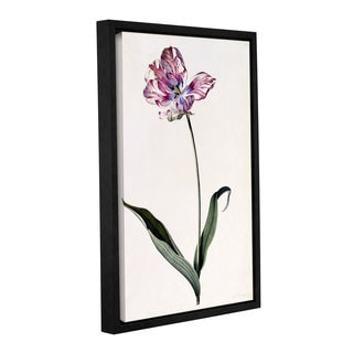 Georg Dionysius Ehret's ' Tulip, 1745' Gallery Wrapped Floater-framed Canvas