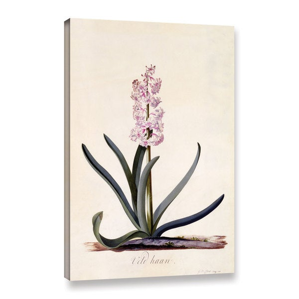 Georg Dionysius Ehret's ' Hyacinth 'Van Haan', 1744' Gallery Wrapped Canvas