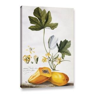 Georg Dionysius Ehret's ' Papaya' Gallery Wrapped Canvas