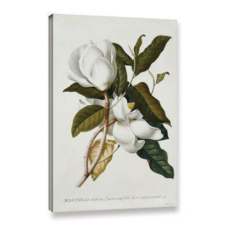 Georg Dionysius Ehret's ' Magnolia' Gallery Wrapped Canvas