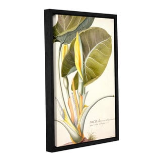 Georg Dionysius Ehret's ' Arum Maximum' Gallery Wrapped Floater-framed Canvas
