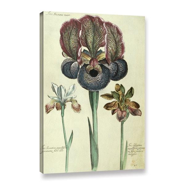 Georg Dionysius Ehret's ' Iris Susiana Major and Iris Bisantina Agustifolia' Gallery Wrapped Canvas