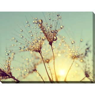 """Dewy dandelion flower at sunset close up Full A"" Giclee Print Canvas Wall Art"