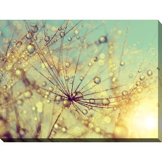 """Dewy dandelion flower at sunset close up Full"" Giclee Print Canvas Wall Art"