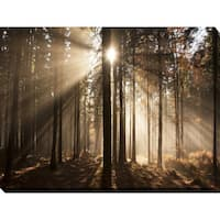 """Autumn morning in forest"" Giclee Print Canvas Wall Art"