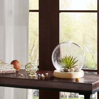 Madison Park Amory Clear Bubble Terrarium with Wood Base- Small