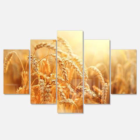 Designart 'Ears of Golden Wheat Close-up' Landscape Metal Wall Art