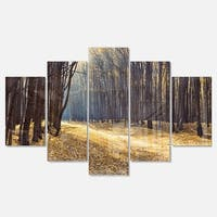Designart 'Path in the Fall Forest Panorama' Large Forest Glossy Metal Wall Art