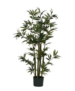 Bamboo Silk Plant (48 in. Tall) - Thumbnail 0