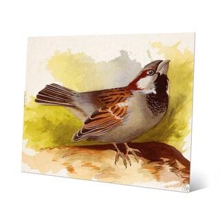 Curious Sparrow Aluminum Metal Wall Art Print