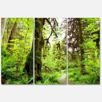 Designart 'Footpath in Redwood Rain Forest' Landscape Glossy Metal Wall Art