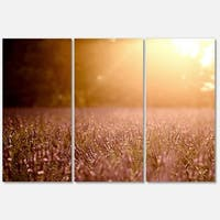 Designart 'Brown Tinged Lavender Field Sunset' Large Floral Glossy Metal Wall Art