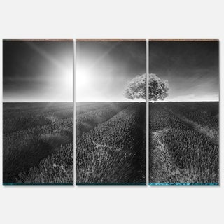 Designart 'Beautiful Black White Lavender Field' Extra Large Landscape Glossy Metal Wall Art