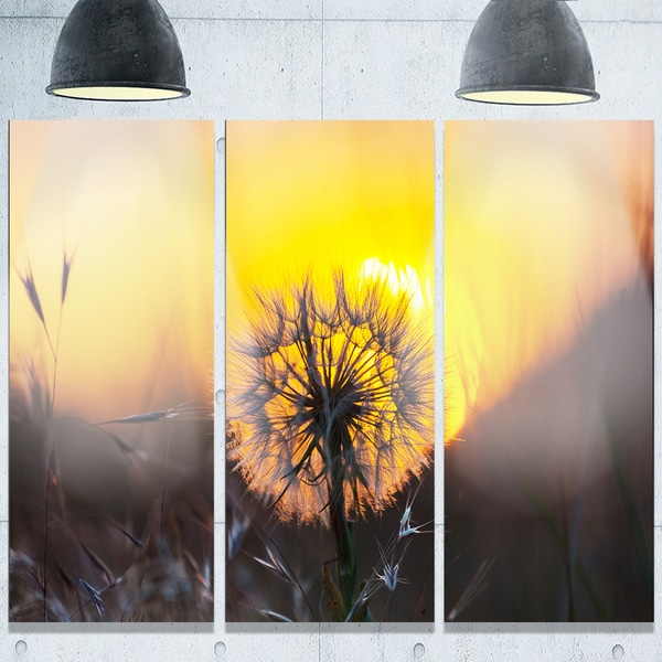 Designart \'Stunning Dandelion View At Sunset\' Large Flower Glossy ...