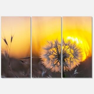 Designart 'Stunning Dandelion View At Sunset' Large Flower Glossy Metal Wall Art