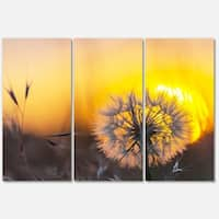 Designart 'Stunning Dandelion View At Sunset' Large Flower Glossy Metal Wall Art