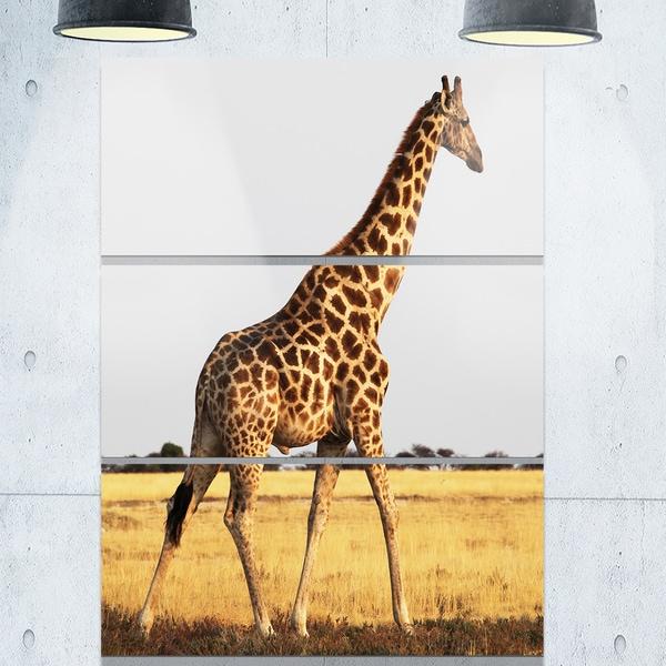 Designart u0026#x27;Single Giraffe in Africa Walkingu0026#x27; Extra Large African  sc 1 st  Overstock & Designart u0027Single Giraffe in Africa Walkingu0027 Extra Large African ...