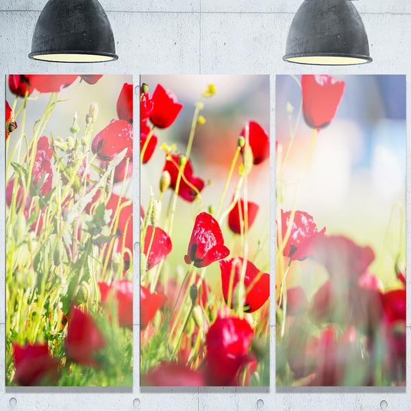 Designart 'Beautiful Red Poppy Flowers View' Modern Flower Glossy Metal Wall Art