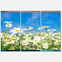 Designart 'White Daisies under Bright Blue Sky' Extra Large Floral Glossy Metal Wall Art