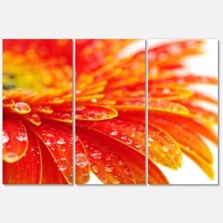 Designart 'Orange Gerbera with Raindrops' Extra Large Floral Glossy Metal Wall Art