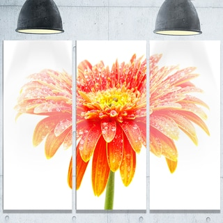 Designart 'Large Orange Gerbera on White' Extra Large Floral Glossy Metal Wall Art