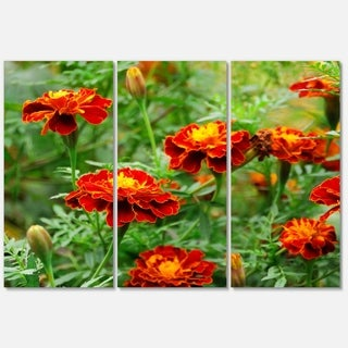 Designart 'Blooming Red Marigold Flowers' Extra Large Floral Glossy Metal Wall Art
