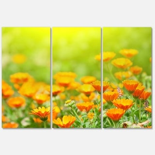 Designart 'Yellow Marigold Flowers' Extra Large Floral Glossy Metal Wall Art