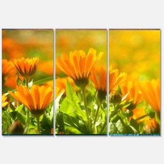 Designart 'Orange Marigold Flowers in Sunlight' Extra Large Floral Glossy Metal Wall Art