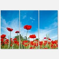 Designart 'Red Poppy Garden under Clear Sky' Flower Glossy Metal Wall Art