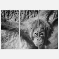 Designart 'Young Orangutan Black' Animal Metal Wall Art
