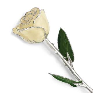 Lacquer Dipped Silver Trimmed White Rose
